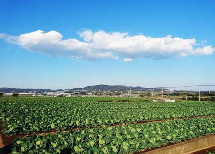 農業の実体験を通して得る⾃然と調和することの⼤切さ